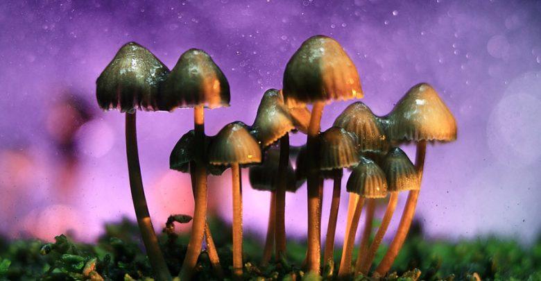 قارچی که مغز را دوباره تنظیم میکند
