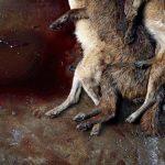 کشتار حیوانات در جشنوارهی یولین در چین