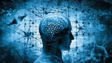 مغز؛ اجزای آن و رابطه آن با رفتار